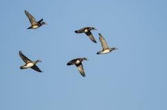 Стадо деревянных уток летая в голубое небо Стоковое Изображение