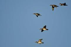 Стадо деревянных уток летая в голубое небо Стоковые Фото