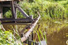 Стадо диких уток сидя на воде Стоковые Изображения RF