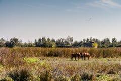 Стадо лошадей запятнало положение в расчистке, зданием H стоковое фото