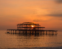 Стадо птицы над пристанью Брайтона западной на заходе солнца Стоковые Изображения RF