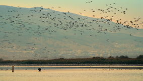 Стадо птиц летать надводный акции видеоматериалы