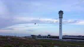 Стадо птиц летая перед башней воздушного движения сток-видео