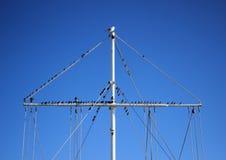 Стадо птиц моря сидя на рангоуте шлюпки Стоковая Фотография RF