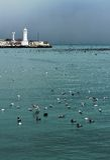Стадо птиц на море Стоковые Фото