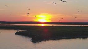 Стадо птиц на предпосылке красочного неба Заход солнца на реке Остров чаек Птицы летают на заход солнца, воздушный сток-видео