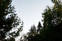 Стадо птиц на сумраке Стоковое фото RF