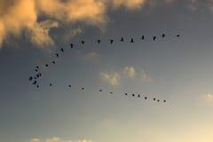 Стадо птиц Стоковая Фотография