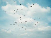 Стадо серого голубя Стоковые Фотографии RF