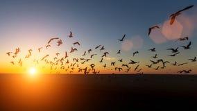 Стадо силуэтов чайок над морем во время захода солнца Стоковые Изображения