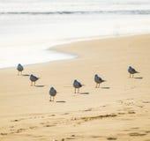 Стадо чайок ждать на пляже Стоковые Изображения