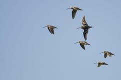 Стадо Wilson& x27; s стрелять летание в голубом небе Стоковая Фотография RF