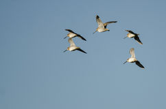 Стадо Wilson& x27; s стрелять летание в голубом небе Стоковое Изображение