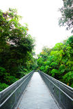 Стальная дорожка идет к лесу стоковые фотографии rf