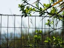 Стальная проволочная изгородь Стоковое Изображение RF