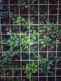 Стальная сетчатая загородка перед предпосылкой стены природы Стоковое Изображение RF