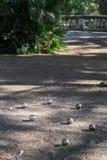 Стальные шарики для игры boules Стоковое Фото