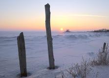 2 ствола дерева на предпосылке захода солнца зимы стоковые фотографии rf