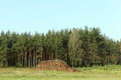 Стволы дерева, внося в журнал Стоковые Фото