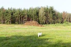 Стволы дерева, внося в журнал Стоковое Изображение RF