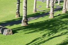 Стволы дерева в парке бросая длинные тени на зеленой траве Стоковые Изображения