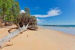 Стволы дерева на пляже Стоковая Фотография RF