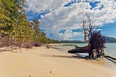 Стволы дерева на пляже Стоковые Фотографии RF