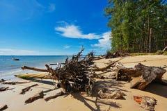 Стволы дерева на пляже Стоковое фото RF