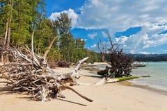 Стволы дерева на пляже Стоковые Фото