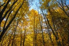 Стволы дерева осени Стоковое Изображение