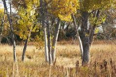 стволы дерева поля Стоковые Изображения RF