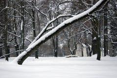 Стволы дерева Принятый в парк Kolomenskoye в Москве Стоковая Фотография