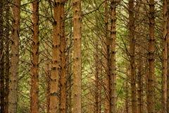 стволы дерева Стоковые Фотографии RF