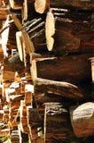 стволы дерева Стоковое Фото