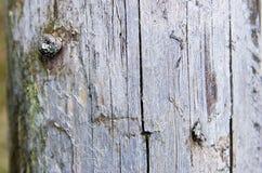Ствол дерева без расшивы Стоковые Фотографии RF