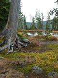 ствол дерева берега озера стоковая фотография