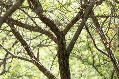 Ствол дерева в лесе Стоковая Фотография