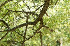 Ствол дерева в лесе Стоковое Изображение RF