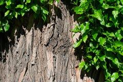 Ствол дерева и яркие ые-зелен листья закрывают, размечают для текста Стоковая Фотография RF