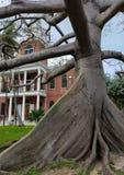 Ствол дерева капка в Floriday стоковое фото