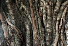 ствол дерева корней carvings баньяна Стоковое Фото