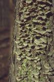 Ствол дерева при мох растя вертикально стоковая фотография rf