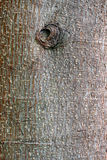 ствол дерева расшивы Стоковые Изображения RF