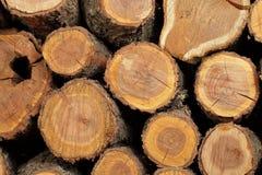 Ствол дерева сложенный красиво Стоковое Изображение RF
