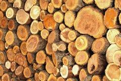Ствол дерева сложенный красиво Стоковые Изображения RF