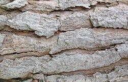 ствол дерева сосенки Стоковая Фотография RF