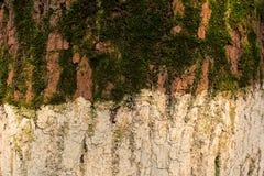 Ствол дерева с мхом и белой краской Стоковая Фотография