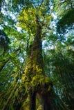 Ствол дерева с мхом и орхидеей в тропическом лесе под взглядом на Doi Стоковое Изображение RF