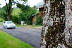 Ствол дерева с мхом на дороге с автомобилем Стоковое Изображение