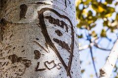 Ствол дерева с словом выреза стоковое изображение rf